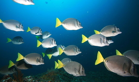 Fish Leaving the Tropics and Moving to the Poles