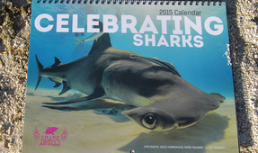 Shark Angels 2015 Calendar Now Available