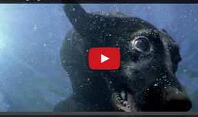 Video of the Week: Slow Motion Doggy Paddle Underwater