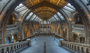 "London Museum to Replace ""Dippy"" Dinosaur with Blue Whale"