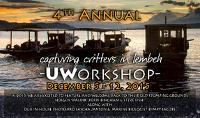 "Reservations Open for ""Capturing Critters in Lembeh"" Workshop"