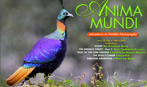 ANIMA MUNDI: Issue 18 Now Available