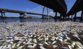 Rio Art Exhibit Highlights Water Pollution Problem