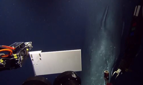 Video: ROV Captures Footage of Sperm Whale