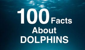New Book: 100 Facts About Dolphins