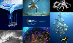 2015 DEEP Indonesia Photo Competition Winners Announced