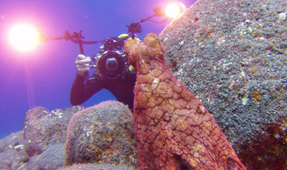Video: Hide and Seek with an Octopus