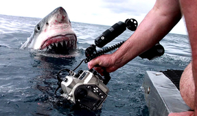 Behind the Scenes of a Viral Great White Shark Photo