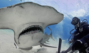 DPG Shark Photo Contributors Featured in Daily Mail