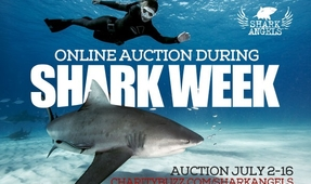 Shark Angels Auction Launches Next Week