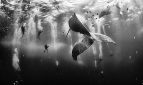 Underwater Shot Takes Top Nat Geo Prize