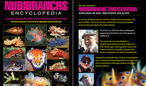 "New Edition of Classic ""Nudibranchs Encyclopedia"" Launched"