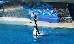 SeaWorld To Change Orca Show