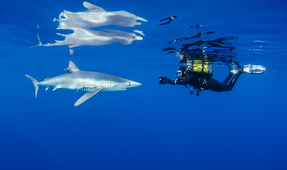 """Shark Business"" Promotes Shark Conservation Through Ecotourism"