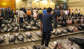 Final New Year Auction at Tokyo's Famed Tsukiji Fish Market
