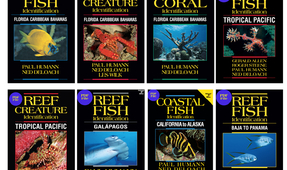 8 Fish ID Books Available as Downloads
