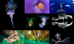Final Day to Enter Our World Underwater Imaging Contest