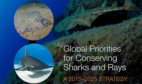 New Global Call to Save Sharks and Rays