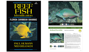 New Enhanced E-Book Version of Reef Fish Identification