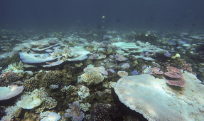 Great Barrier Reef Mass Bleaching Worst in Its History