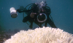 Film Company Calls for Underwater Photographers to Help Document Global Coral Bleaching