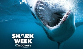 Discovery Announces 2016 Shark Week Lineup