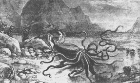 Study: Giant Squid Grow Larger than Buses