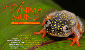 ANIMA MUNDI: Issue 23 Now Available