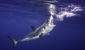 Ominous Music Creates Negative Impression of Sharks