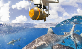 "Australia to Release Drones that ""Bomb Sharks"""