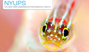 NYUPS Meeting Tonight: Fish Portraits