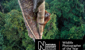 Winners of Wildlife Photographer of the Year 2016