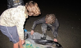 British Surfers Save Struggling Porpoise