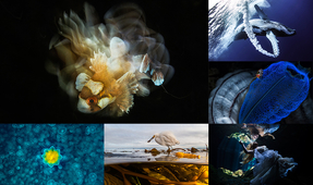 Our World Underwater 2017 Competition Winners Announced