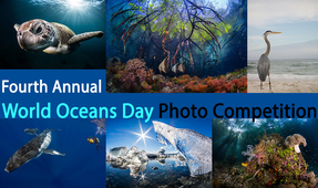 Fourth Annual World Oceans Day Photo Competition
