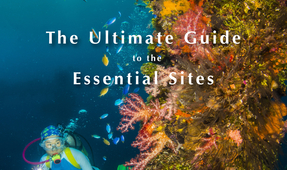 New Book by Tim Rock: 50 Best Sites in Micronesia