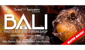 Seasick Productions Announces Photo/Video Macro Workshop in Bali