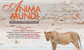 ANIMA MUNDI: Issue 27 Now Available