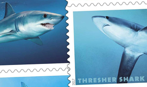 United States Postal Service Adds Sharks to Forever Stamps