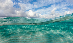 New Study Reveals Ocean Vitals Stable, But Not Healthy
