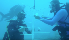 Deepest Coral Nursery Created by Scientists and Astronauts