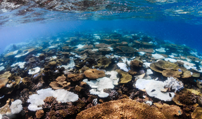 Studies Find Coral in Gulf of Aqaba Resistant to Global Warming