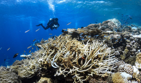 World Heritage Coral Reefs in Danger of Disappearing by 2100