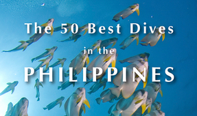 New Book by Tim Rock: 50 Best Dives in the Philippines