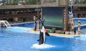 "Former SeaWorld Trainer Calls Orca Conditions ""Disgrace to Humanity"""
