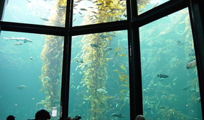Hawaii Suspends Issuance of Aquarium Collection Permits