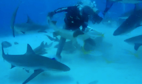 Dive Guide Abuses Nurse Sharks in Disturbing Video (Updated)