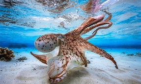 Underwater Photographer of the Year 2018 Open for Entries