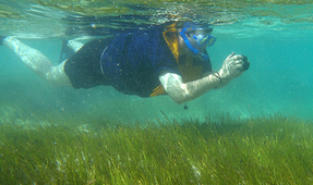 Importance of Seagrass Conservation Emphasized in New Study