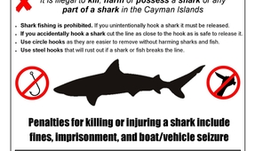 More Illegal Shark Fishing in Cayman Discovered